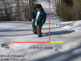 Bigfoot, Sasquatch, Yeti, Tracks, Footprints, Human Scale Comparison